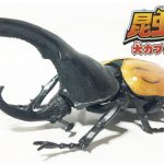 【レビュー】売り切れ続出のリアル過ぎる食玩!昆虫の森 大カブトムシ祭りを買ってきた!